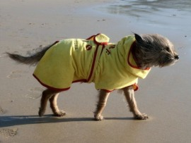 Dog Drying Coats - Yellow
